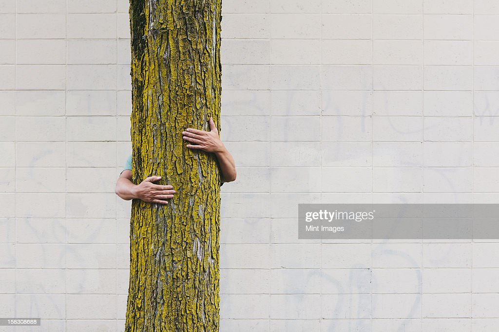 A man hugging a tree on an urban street in Seattle. : Stock Photo