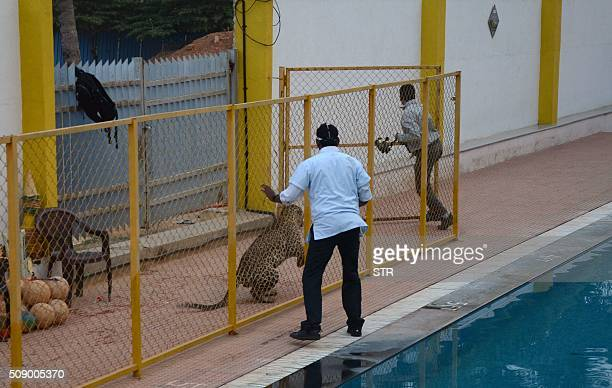 A man identified by Indian media as wildlife conservationist Sanjay Gubbi tries to run away from a leopard at a private school on the outskirts of...