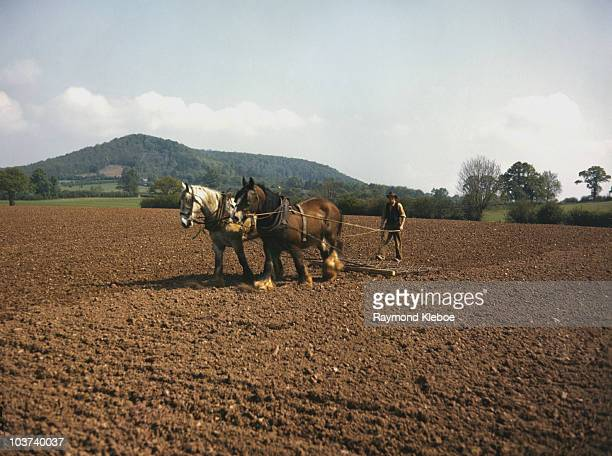 A man in a field using a plough being pulled by two horses England Great Britain 19 July 1952 Original Publication Picture Post The English Scene...