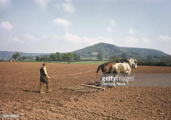 A man in a field using a plough being pulled by two horses England Great Britain 19th July 1952 Original Publication Picture Post The English Scene...