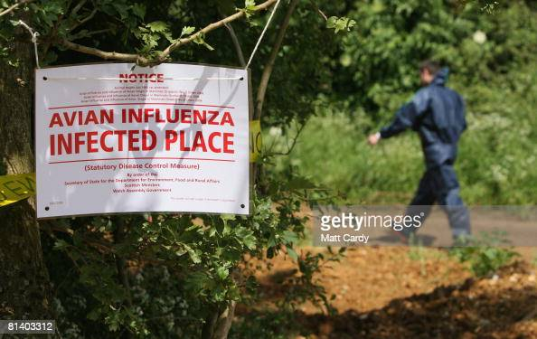 A man in a protective body suit walks past a sign warning of a outbreak of the H7 strain of bird flu at Eastwood Farm near Banbury on June 4 2008 in...