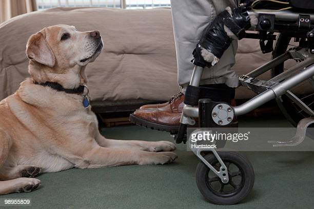 Man in a wheelchair with a service dog