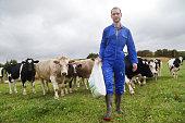 Man in blue boiler suit walking , cows in field