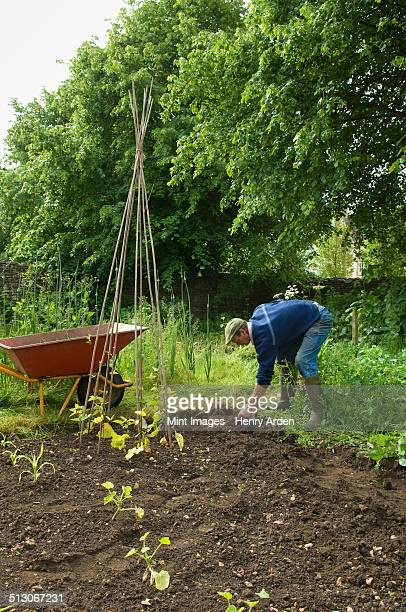 A man in boots digging in the soil in his vegetable garden. Runner beans planted.