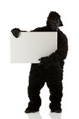Man in gorilla costume holding a placard