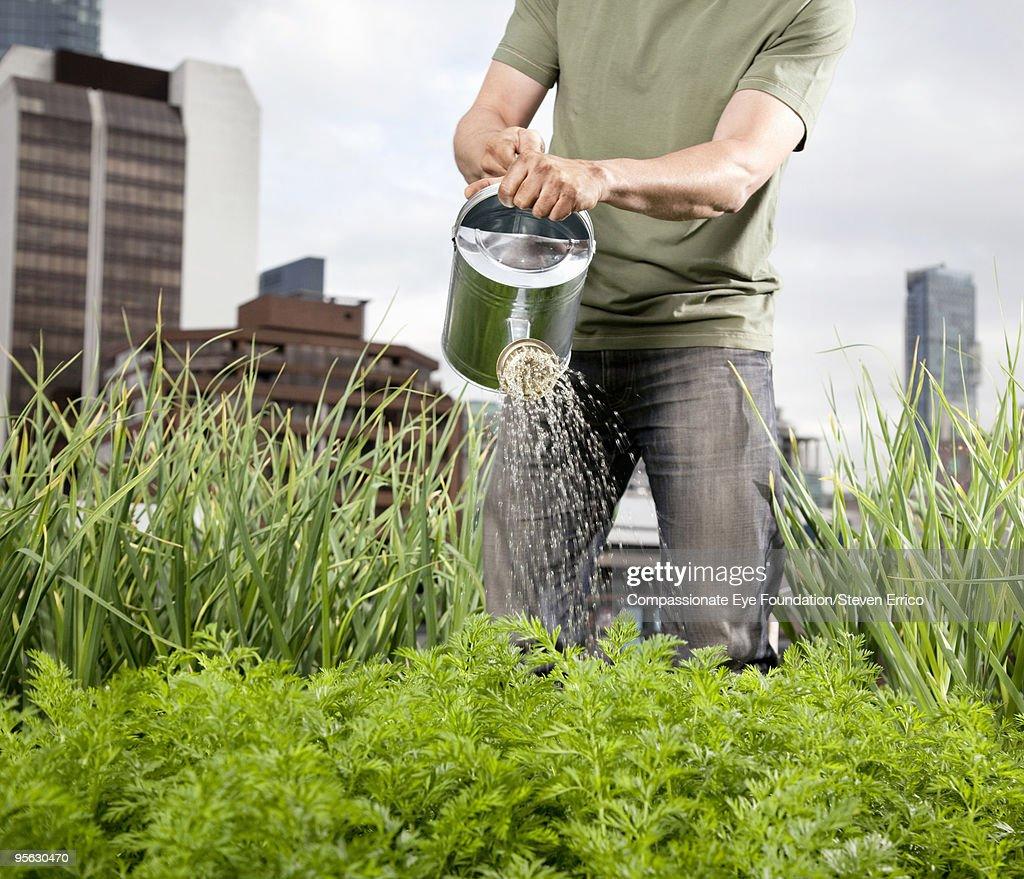 man in jeans watering plants