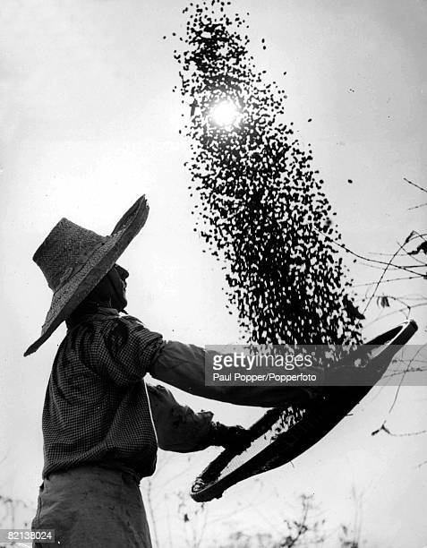 Man in large hat with wicker basket in his hands throwing coffee beans into the air at a Brazilian plantation