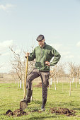 Man in orchard - fruit seedling