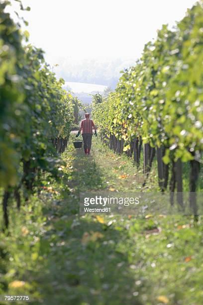 Man in vinyard