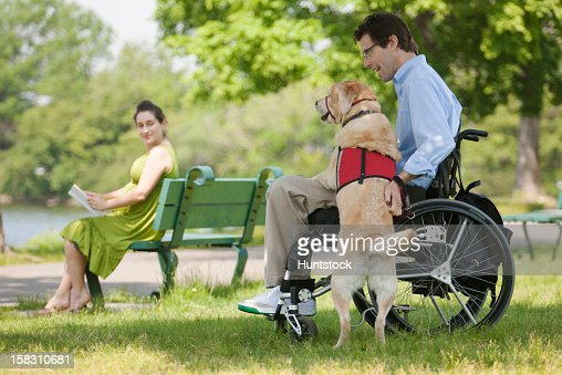 Man in wheelchair with spinal cord injury talking with service dog with his pregnant wife in the background : Stock Photo