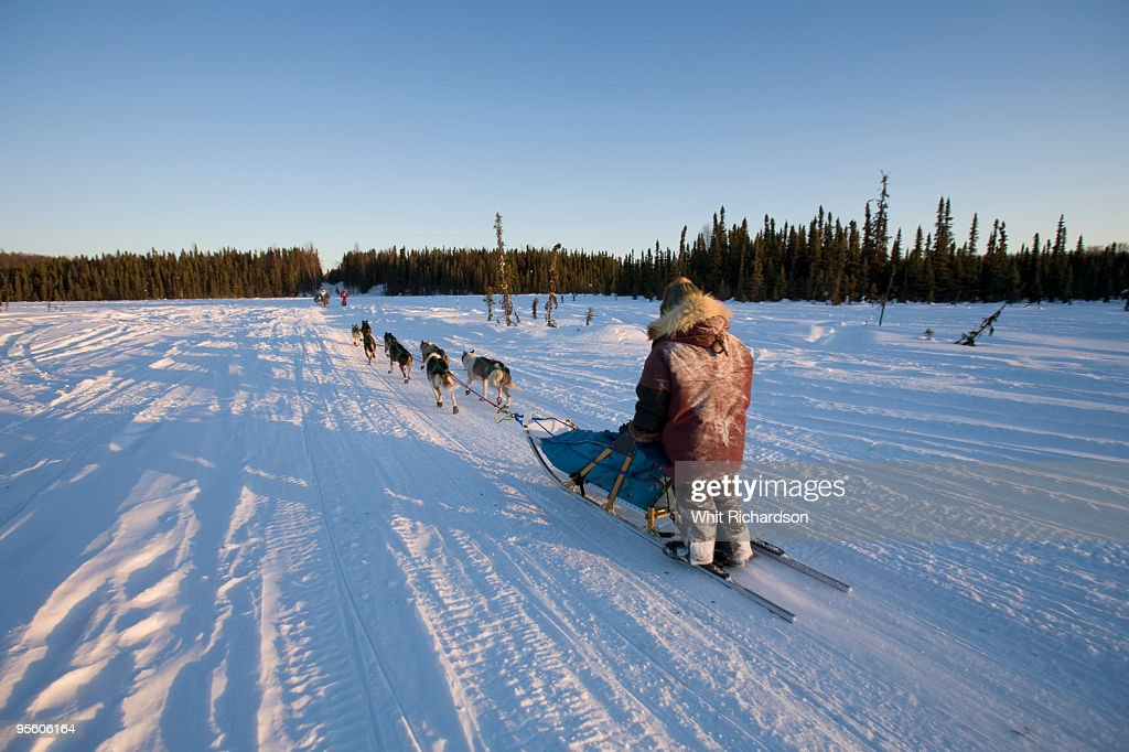 A man is pulled by a team of dogs on the back of a dog sled in Alaska.