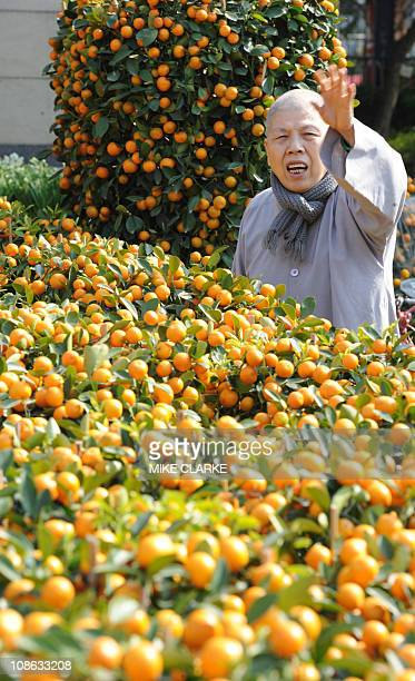 A man is surrouned by kumquat trees popular for the Lunar New Year while shopping at a flower market set up at Victoria Park in Hong Kong on January...