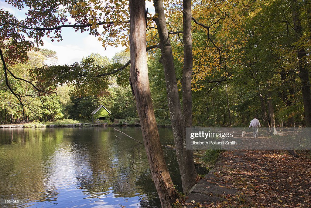 A man jogging with dog in a park in the fall : Stock Photo