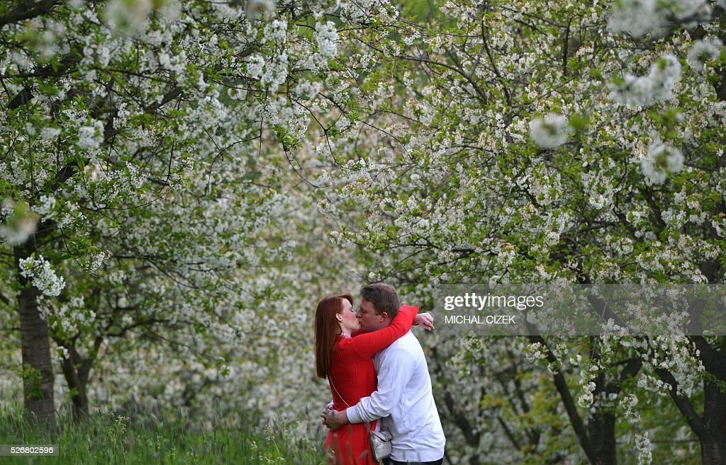 A man kisses with his girlfriend under the blossoming trees, a Czech tradition, on May 1, 2016, at Petrin hill, in Prague. / AFP / Michal Cizek