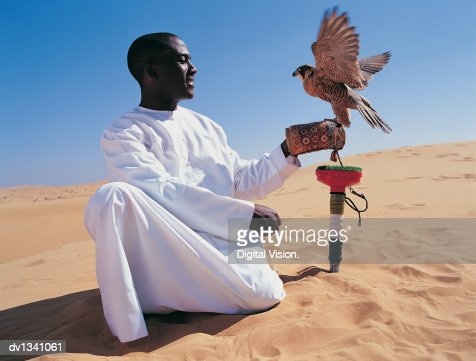 Man Kneeling in the Desert With a Falcon Flapping Its Wings and Perching on His Hand : Stock Photo