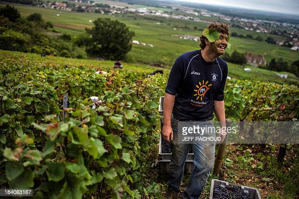 A man laughs after placing grape leaves on his ears in Faiveley in NuitsSaintGeorges during the harvest period on October 7 2013 AFP PHOTO / JEFF...