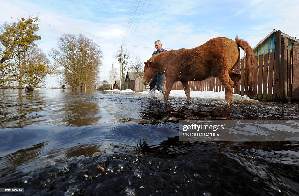 A man leads his horse during spring flood in a village of Snyadin some 300 km south of Minsk, on April 9, 2013. Belarus will take all necessary precautions to minimize the consequences of spring floods, Belarus President Alexander Lukashenko said as he visited Minsk-based Sukno Company on 5 April. AFP PHOTO / VIKTOR DRACHEV