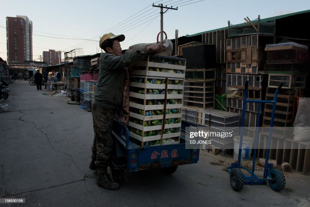 A man loads boxes of parakeets onto a tricycle at a pigeon market in Beijing on December 18, 2012. The market was once the city's largest until plans were announced to demolish the area to make way for an office development. Vendors, who pay around 0.4 Yuan (0.06 USD) per square metre, according to state media, offer a variety of pigeon-fancying paraphernalia and other animals including rabbits, dogs, and crickets. AFP PHOTO / Ed Jones