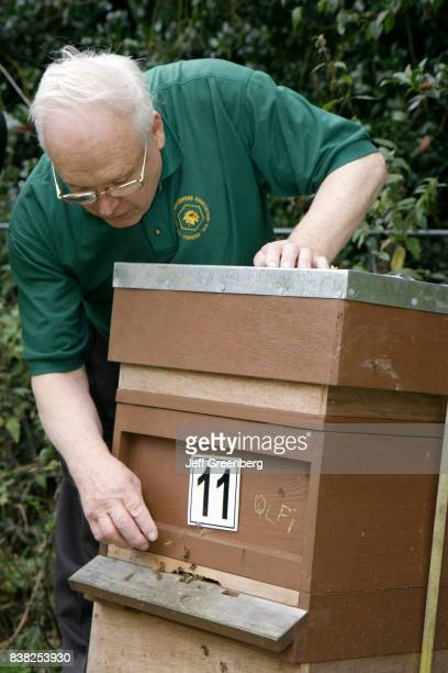 A man looking at a apiary beehive at Manchester Beekeepers