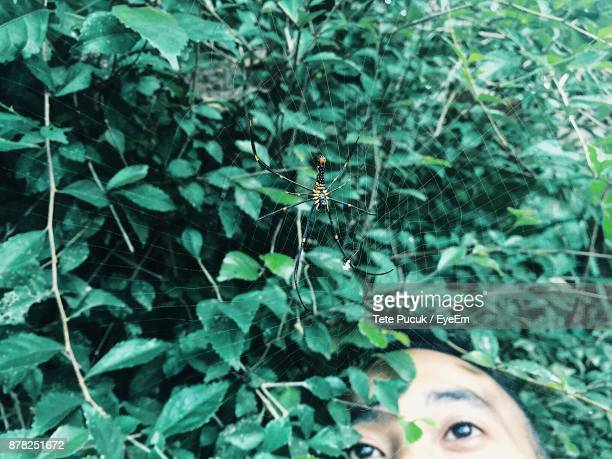 Man Looking At Spider On Web