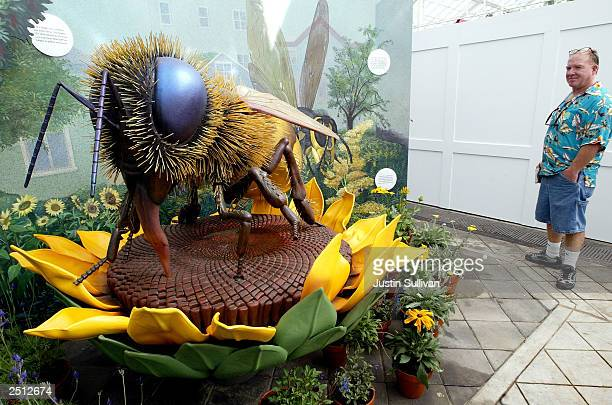 A man looks at a life size honey bee sculpture inside the San Francisco Conservatory of Flowers September 19 2003 in San Francisco The...