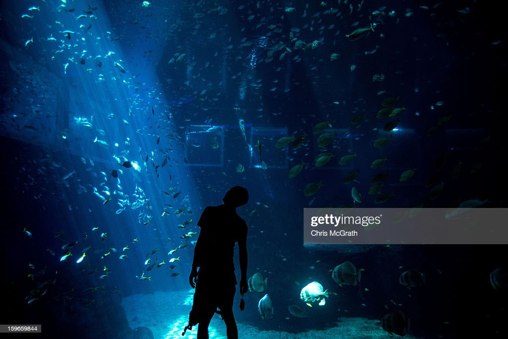 A man looks at marine wildlife on display at Resort World Sentosa's Marine Life Park, January 18, 2013 in Singapore. The Marina Life Park is Resort World Sentosa's newest attraction and is the world's largest aquarium, with 100,000 marine animals of over 800 species housed in 45 million litres of water.
