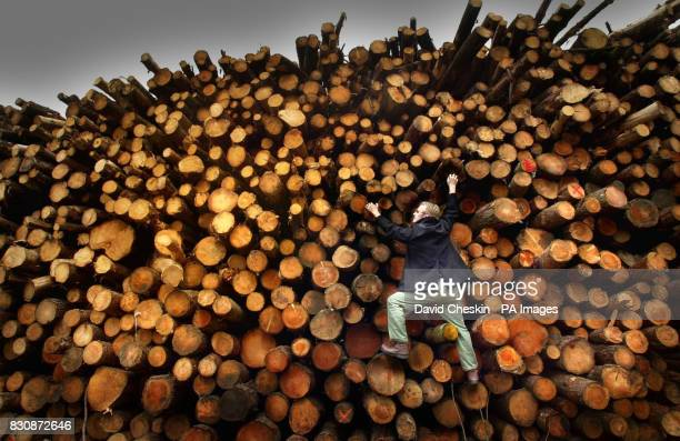 A man looks over a giant timber stack after a wood was cut down by the Scottish Forestry Commission in the Scottish Borders