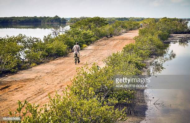 A man member of a group of Cubans and tourists from the US and Russia walks to take pictures of birds in Cienaga de Zapata Bay of Pigs Matanzas Cuba...
