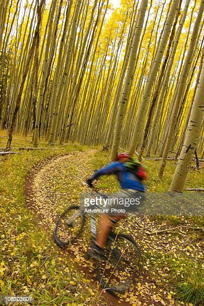 Man Mountain Biking Trail in Aspen Forest, Motion Blur