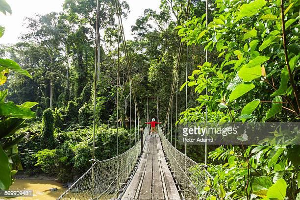 Man on bridge, tropical rainforest, Sabah, Borneo