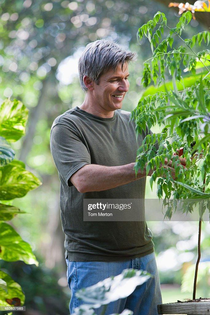 Man outdoors gardening : Stock Photo