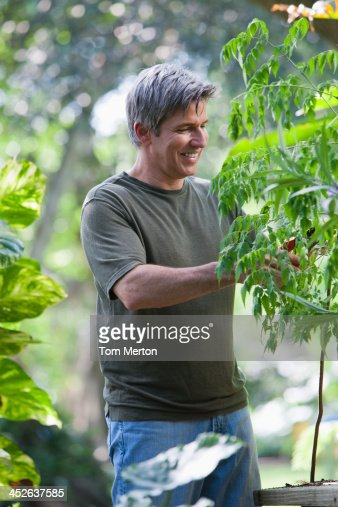 Man outdoors gardening : Stock Photo