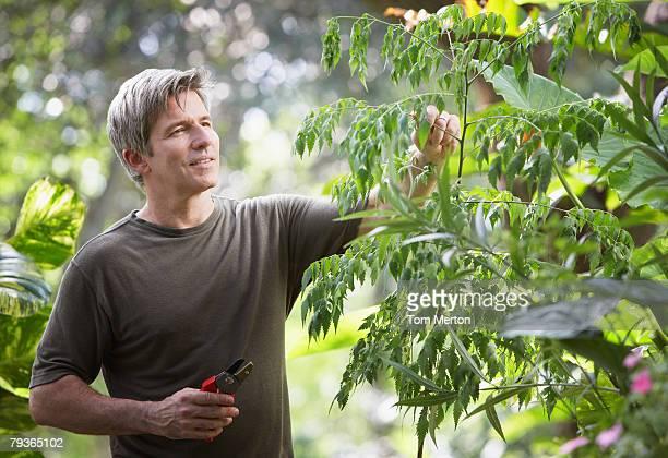 Man outdoors gardening