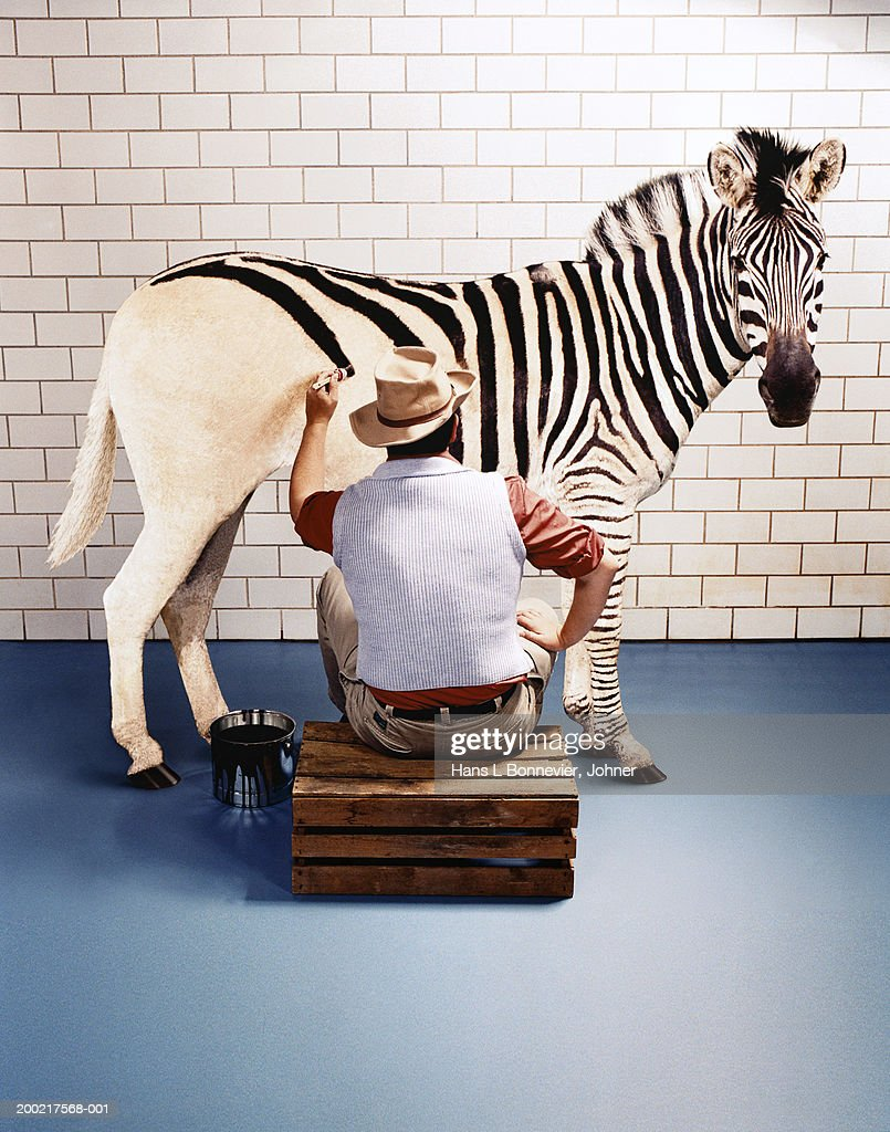 Man painting horse with zebra stripes, indoors, rear view