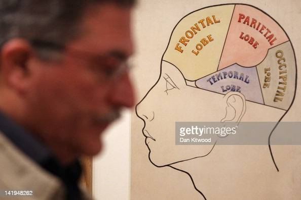 A man passes an exhibit at the Wellcome trusts new 'Brains' exhibition at the Wellcome Collection on March 27 2012 in London England The exhibit...