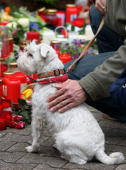A man pets a dog in front of candles and flowers at the Albertville School Centre on March 13 2009 in Winnenden near Stuttgart Germany 17 year old...
