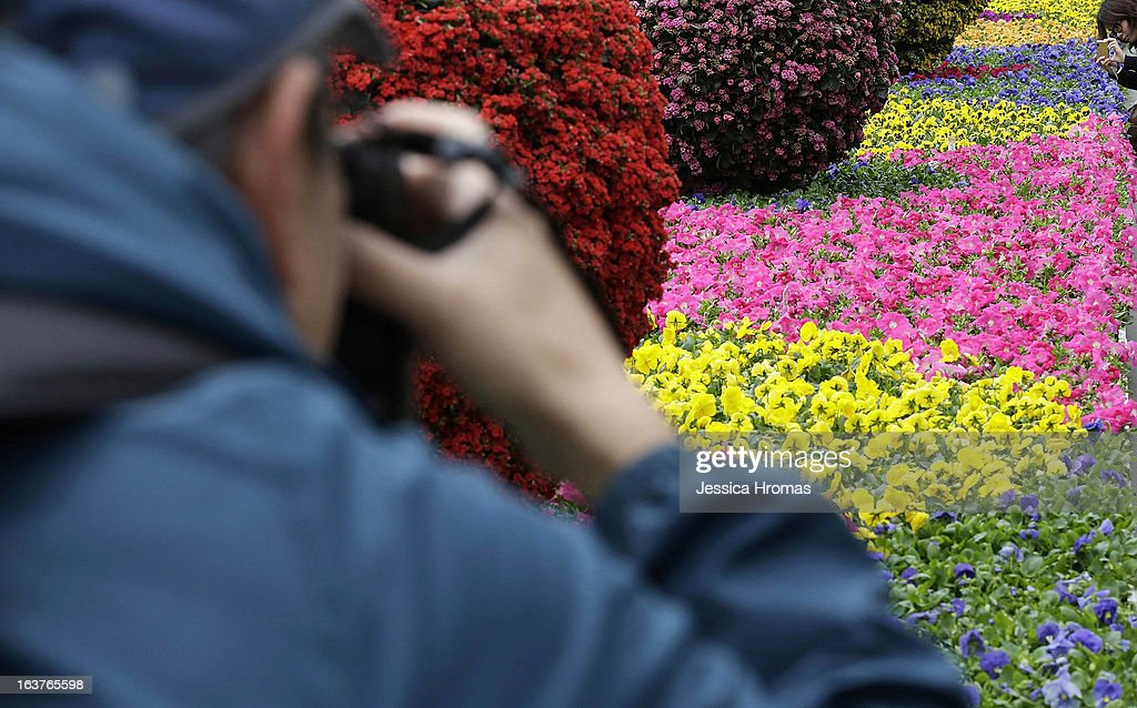 A man photographs flowers at the 2013 Hong Kong Flower Show at Victoria Park on March 15, 2013 in Hong Kong, Hong Kong. The 2013 Hong Kong Flower Show opened today and will continue until March 24, 2013.