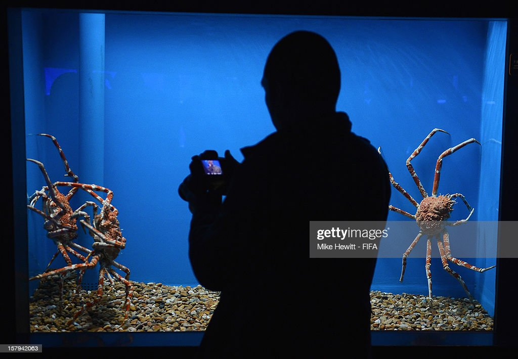 A man photographs Japanese spider crabs at the Tokyo SkyTree Aquarium ahead of the FIFA Club World Cup in Tokyo on December 8, 2012 in Yokohama, Japan.