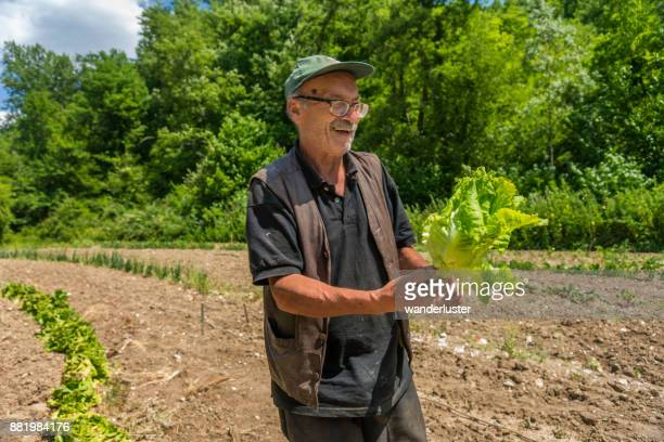 Man picking vegetables from garden in Italy