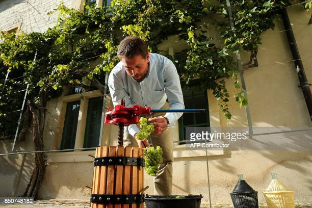A man places verjus grapes harvested from a 300yearold grapevine into a manual press at the former Jesuit secondary school in Reims eastern France on...