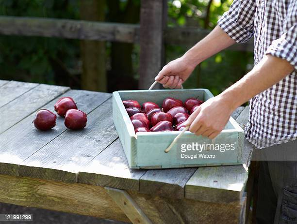 Man placing tray of apples on garden table.