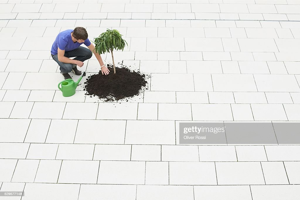 Man Planting a Tree : Stock Photo