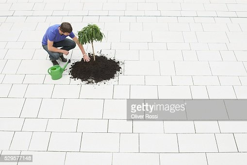 Man Planting a Tree : Stock-Foto
