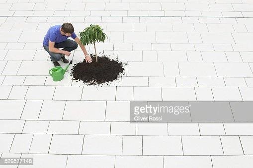 Man Planting a Tree : Stock Photo