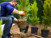 Man planting evergreen tree, Antalya, Turkey