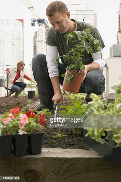 Man planting roof garden