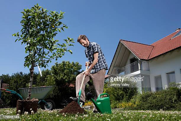 Man planting tree in backyard