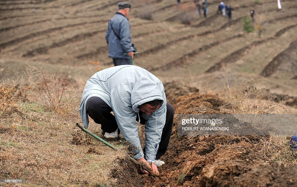 """A man plants a tree on a hill slope near Skopje on November 21, 2012. Macedonia is planting today about 3 million trees throughout the country under the motto """"Tree Day - Plant Your Future'."""
