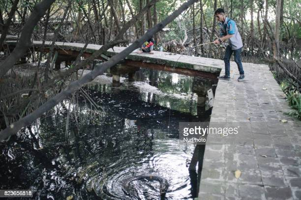 A man play fishing with wild crocodile on coastal mangroves along shoreline of Jakarta on July 27 2017 Mangrove forests in Indonesia can survive from...