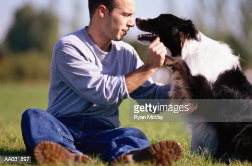 Man Playing with Border Collie : Bildbanksbilder